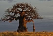 árvores e... / by Lizete Lemos