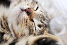 cute stuffs in fur