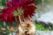 Raindrops keep Fallin' on My Head / by Saundra McKenzie