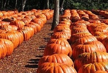 It's Fall Yall