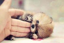 Cuteness Overload / :3