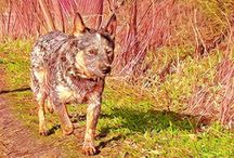 Life is Great / Cattle Dog