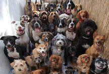 Собаки / Разные породы собак