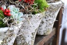 Succulent garden | Суккуленты