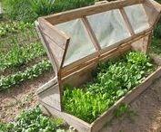 Greenhouse | Сад. Теплицы