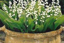Spring garden | Сад. Весна