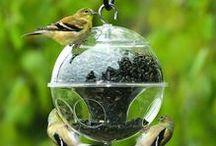 Birds feeders | Сад. Кормушки