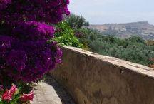 Rememberance of Palermo, Sicily Visit