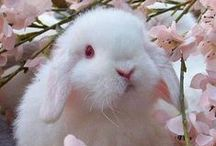Darling Bunnies!