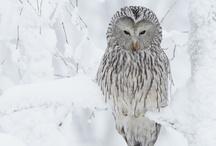 Baby it's cold outside! / by Rachel Deerfield
