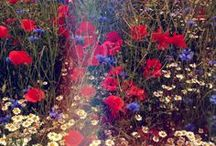 <<>>THE FLORA<<>> / by jessica leigh