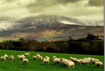 Ireland / Loved our trip to Ireland and would go back in a heartbeat / by Linda Freeman