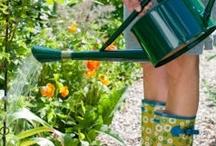 Gardening / by Marianne Paulsen