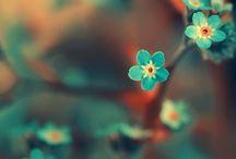 Colour Love...