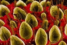 c e l l u l a r / Images of cells and micro organisms. / by Molly