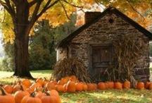 Fall/Halloween 🎃👻 / by Rachel B