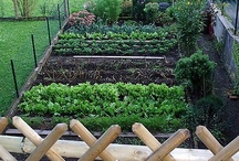 Gardening  / Gradening is fun, it's easy, and you get to enjoy fresh veggies and fruit. Not to mention the money you save......  / by Ann Harvill