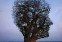 trees on strange shape