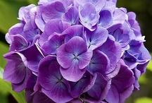 Nature in Violet - Purple