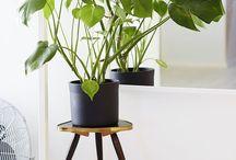 Plantes intérieures/Botanical / #plantes #jardinage
