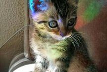 Tęczowe kotki