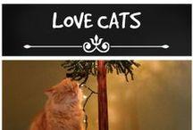 Asha the Cat