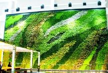 Living Walls / cause we love green roofs and living walls / by Inhabitat