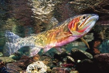 Fresh Water Fish & Other Wonderful Creatures / by Arlene McKnight