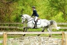 Equestrian / by Ashley