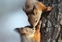 Squirrels....Love Em