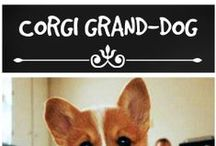 Corgi Grand-dog