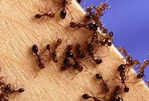 Pest Control / We all need to know this