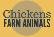 Farm Animals || Chickens & Coops / Everything you need to be successful raising chickens on your homestead. Including building chicken coops, chicken feed, DIY coops