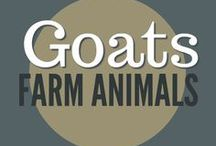 Farm Animals || Goats / Raising goats, goat breeds, pasture practices, deworming, secure fencing for goats