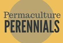 Permaculture + Perennials / Permaculture practices, growing perennials