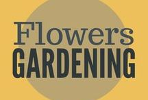 Gardening || Flowers / Flowers are important to the pollinators in your garden. Grow annual and perennial flowers for beauty