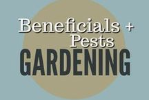 Gardening || Pests and Beneficials / Beneficial insects, mason bees, bats, bat houses, birds, gardens pests, natural garden pest control