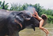 Elephants & Asia / Elephants & Asia Board: For those who love animals and btw all of them, adore elephants, nature and dream to travel to Asia.