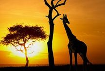 Safari / Animal safari, nature safari, wine tour: Whatever you're looking to do in Africa, you can find insider's travel guides and top expert tips here.