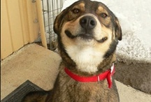 Dogs Make us Smile / Funny and Cute Pet Photos! / by Signature Series