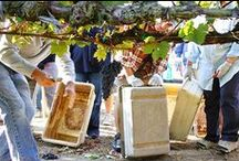 Found in Sonoma / Sights and discoveries around Sonoma County, with a focus on wine.  / by SmarterTravel
