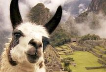 Destination: South America / Everything we love about South America!