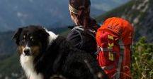 Wandern mit Hund / Wandern und Bergwandern mit Hund #wandernmithund #hikingdogs