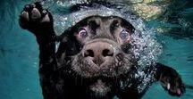 Hunde Bücher Kalender / Bücher und Kalender rund um den Hund #hundebuch #hundekalender