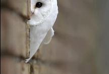 Owls / by Nicole Lussier