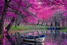 what a wonderful world / the Universe, nature, wildlife, flowers, landmarks, beauty