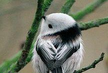 Birds Go Tweet