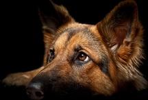 Pups / by Patriot Rebel