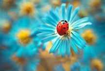 Ladybugs and Dragonflies / by Belinda Roussel