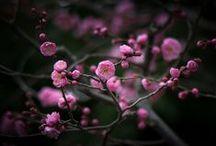 Flowers 2 / by Belinda Roussel